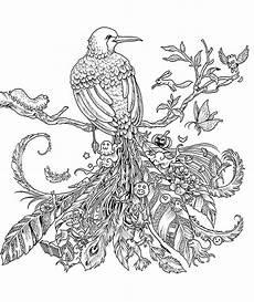 vogel 2 ausmalbilder f 252 r erwachsene