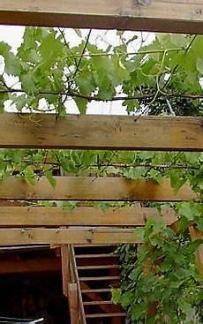 Pergola Erziehung Wein Garten