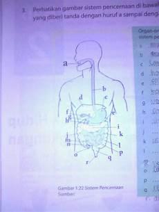 Gambar Sistem Pencernaan Dan Bagian Bagiannya Berbagai