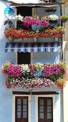 fioriere per davanzale finestra window boxes in bolzano trentino alto adige italy