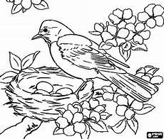 malvorlage vogel im nest vogel bild ausmalbilder vogel im nest
