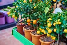 Quels Arbres Fruitiers Mettre Sur Balcon Pratique Fr