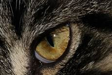 Ninjago Malvorlagen Augen Tier Tierauge Augen 183 Kostenloses Foto Auf Pixabay