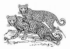 Ausmalbilder Leopard Ausdrucken Malvorlage Leopard Kostenlose Ausmalbilder Zum Ausdrucken