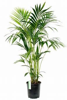 kamerplanten kopen grootste assortiment
