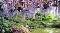 Free Desktop Wallpaper Flower Garden by Flowers Garden Pond Wisteria Hd Wallpaper Free