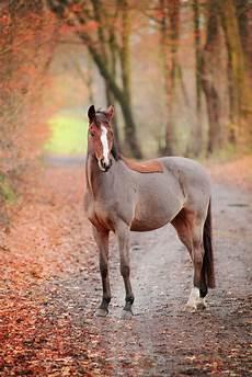 pferde fotoshooting im herbst mit trakhener lucky