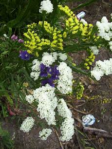 flor del estado tachira 100 6841 flores en el p 225 ramo del estado t 225 chira en la v 237 a flickr