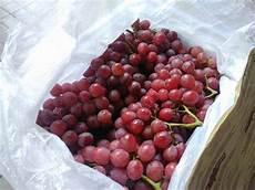 Jual Buah Anggur Merah Import Murah Di Lapak Buah Anggur