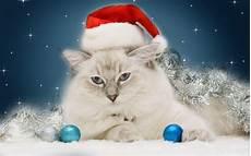 art drawing cat wearing cap santa claus mer 10639 wallpaper high resolution wallarthd com