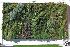 vertikale begrünung selber machen vertikale g 228 rten gr 252 ne pflanzenw 228 nde gegen alltagsgrau