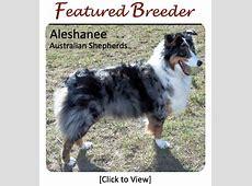 Australian Shepherd Breeders   Canada's Guide to Dogs