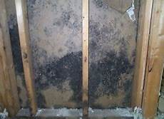 All You Need To About How To Remove Mold From Inside