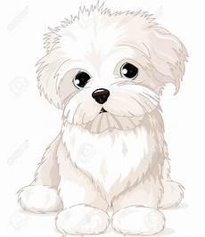 malvorlage malteser hund amorphi