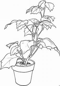 gratis malvorlagen blumen pflanze ausmalbild malvorlage blumen