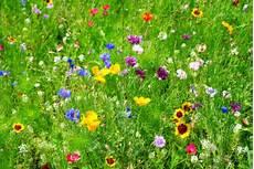 fiori d bach i fiori di bach diana cordara