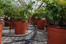 irrigazione a goccia vasi irrigazione goccia vasi