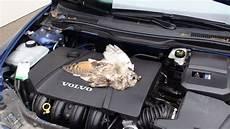 mader tier auto dsc00505 tier unter der motorhaube mader abgelegt
