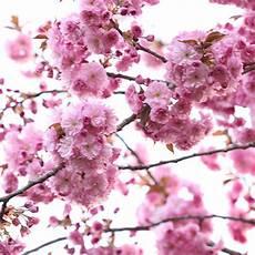 Blumen Malvorlagen Kostenlos Umwandeln Blumenbilder Kostenlos Sch 246 Ne Fotos Und Zeichnungen Mit