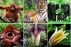 10 Flora Dan Fauna Di Indonesia Beserta Gambar Dan