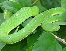 My Toroool HD Wallpaper Of Green Snake