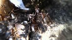 ameisen im garten ameisen im garten 1