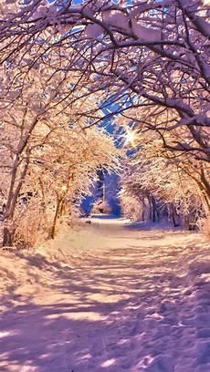 iphone wallpaper winter trees winter snow tree road iphone 6 wallpapers hd free winter