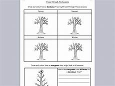 science plants ks1 worksheets 13580 ks1 science deciduous and evergreen trees through seasons worksheet teaching resources