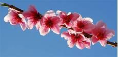 sfondo a fiori guerriero della luce fiori mondo 2