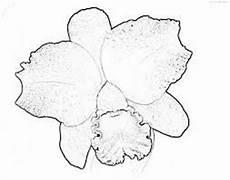 orquidea nacional para colorear pinterest the world s catalog of ideas