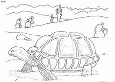 desert animals coloring pages printable 16950 desert animals for coloring pages coloring pages for adults coloring the o