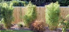 16 Gartengestaltung Mit Bambus Und Gr 228 Sern Garten