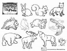 woodland creatures coloring pages coloring home