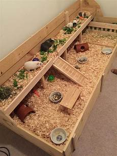 guinea pig house plans the 25 best guinea pig cages ideas on pinterest cages