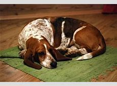 dog pneumonia symptoms and treatment