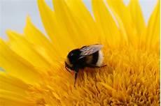 Gambar Alam Mekar Menanam Daun Bunga Berkembang