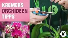 wie pflegt orchideen orchideen tipps richtig schneiden umtopfen tauchen