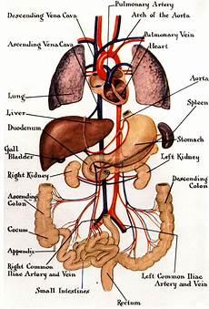 Pictures Gallery Organs Organs Diagram