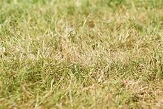 Verbrannter Rasen Wie Rette Ich Meinen Rasen Das
