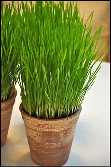 simple details wheat grass it s time