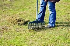 Wie K 246 Nnen Sie Moos Dauerhaft Entfernen Im Rasen Und Auf