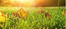 Rasenpflege Im Herbst - die rasenpflege im herbst rasenduenger de