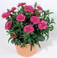 best plants for container gardens garden talk