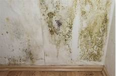 how to kill mold in walls hunker