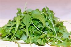 rucola salat das comeback eines mediterranen gew 228 chs