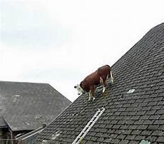 auf dem dach kopfnuss 5 grillratte