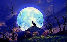 Vollmond Wolf Wallpaper wolf natur vollmond yelp hintergrundbilder wolf natur