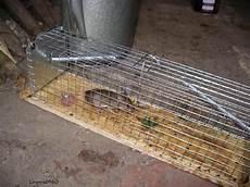 nagetiere im haus und garten was tun maus futter ratten