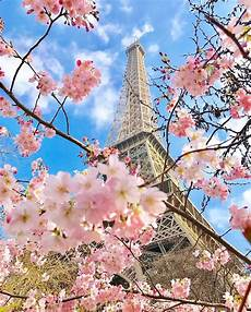 La Tour Eiffel On Quot Trees Are Blossoming Birds
