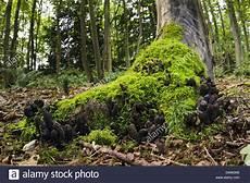 bayer baumstumpf killer fungi roots root fungus stockfotos fungi roots root